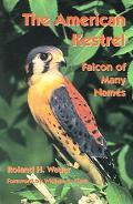 American Kestrel Falcon Of Many Names