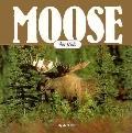 Moose for Kids