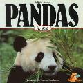 Pandas for Kids - Kathy Feeney - Paperback