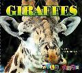 Giraffes - Jill Anderson - Hardcover