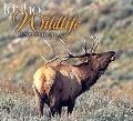 Idaho Wildlife Impressions