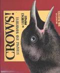 Crows! Strange and Wonderful