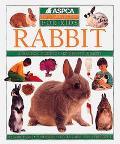Aspca Pet Care Guides for Kids: Rabbit
