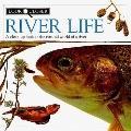 River Life: Look Closer