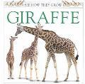See How They Grow: Giraffe