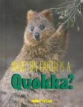 What on Earth Is a Quokka?