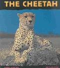 Cheetah Fast As Lightning