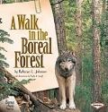 Walk in the Boreal Forest