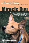 Miracle Dog How Quentin Survived The Gas Chamber To Speak For Animals On Death Row