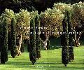 Mirrors of Paradise The Gardens of Fernando Caruncho