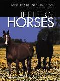 Life of Horses