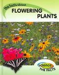 Facts About Flowering Plants