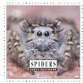 Spiders Let's Investigate