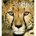 Cheetahs (Living Wild)