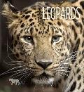 Living Wild - Leopards