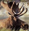 Living Wild - Moose