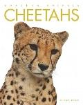 Amazing Animals - Cheetahs