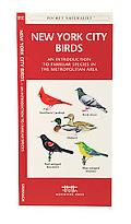 New York City Birds An Introduction to Familiar Species