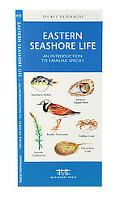 Eastern Seashore Life An Introduction to Familar Species