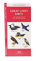 Great Lakes Birds