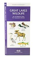 Great Lakes Wildlife An Introduction to Familiar Species