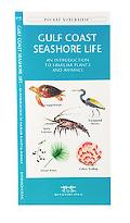 Gulf Coast Seashore Life An Introduction to Familiar Plants and Animals
