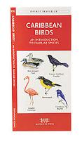 Caribbean Birds An Introduction to Familiar Species