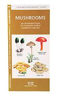 Mushrooms An Introduction to Familiar North American Species