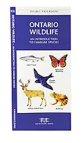 Ontario Wildlife An Introduction to Familiar Species