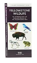 Yellowstone Wildlife An Introduction to Familiar Species of Yellowstone Area