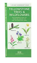 Yellowstone Trees & Wildflowers An Introduction To Familiar Species Of The Yellowstone Area