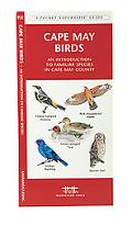 Cape May Birds An Introduction to Familiar Species in Cape May County