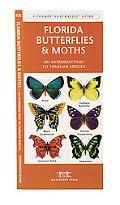 Florida Butterflies & Moths An Introduction to Familiar Species
