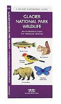 Glacier National Park Wildlife An Introduction to Familiar Species