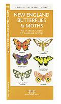 New England Butterflies and Moths