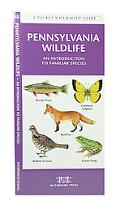 Pennsylvania Wildlife: An Introduction to Familiar Species of Birds, Mammals, Reptiles, Amph...