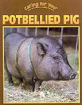 Caring For Your Potbellied Pig