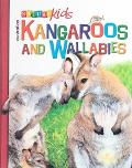 Australian Kangaroos and Wallabies