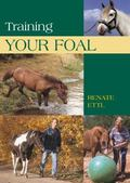 Training Your Foal Schooling And Training Young Horses