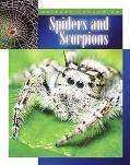 Spiders and Scorpions