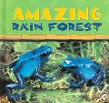 Amazing Rain Forest