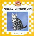 American Shorthair Cats