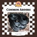 Common Adders