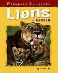 Lions in Danger