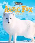 Arctic Fox: Very Cool!