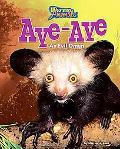 Aye-Aye: An Evil Omen