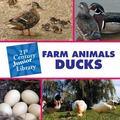 Farm Animals Ducks (21st Century Junior Library)