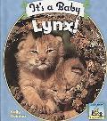 It's a Baby Lynx!