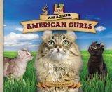 Amazing American Curls (Cat Craze)