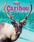 Caribou : And Reindeer, Too